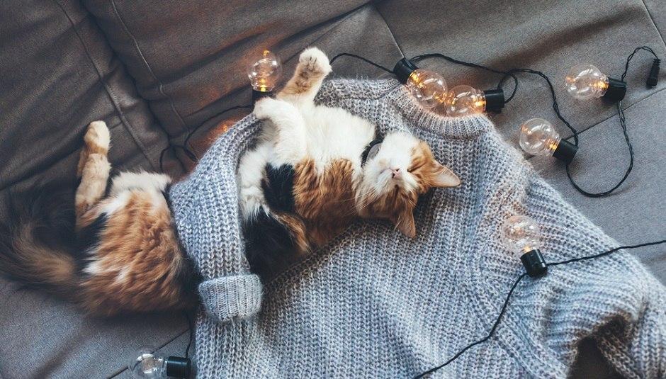 Почему коты любят лежать на новых вещах?