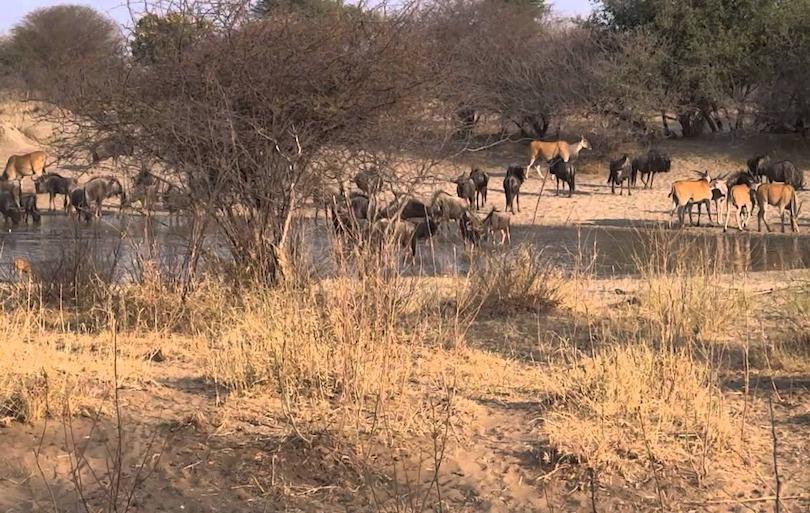 10 самых красивых национальных парков Намибии: туда стремятся попасть туристы со всего мира