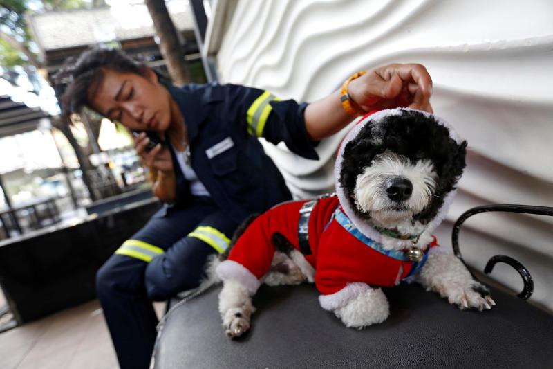 28-летней уборщице из Таиланда парень купил щенка. Теперь этим дуэтом умиляются прохожие