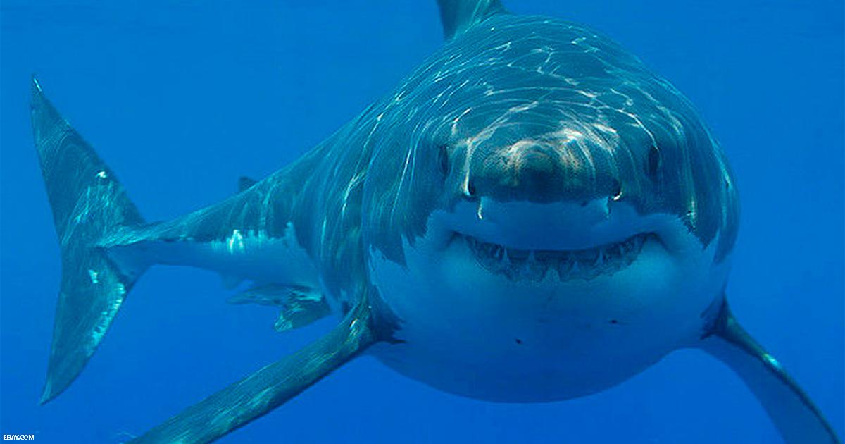 Есть в мире хищник, которого ужасно боятся акулы. Вот что он с ними делает