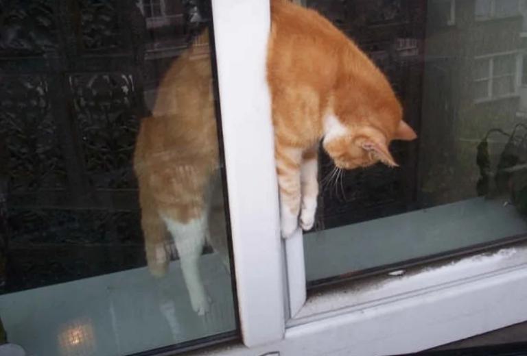 Никогда не делайте этого, если у вас есть кот!