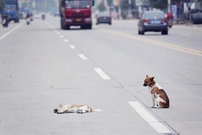 Собираясь в отпуск, они переезжают свою собаку машиной, потому что оставить не с кем