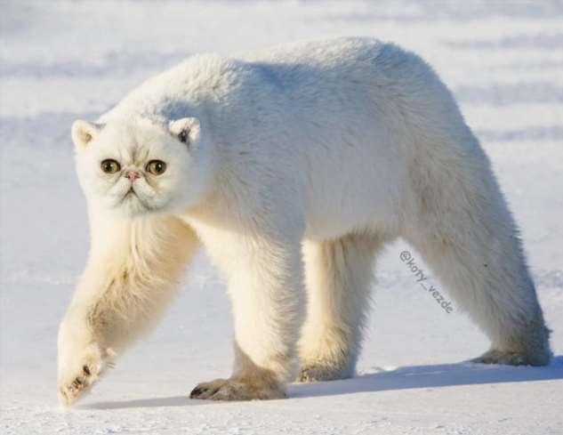 2 гибрида котов с другими животными, в чьё существование почти можно поверить