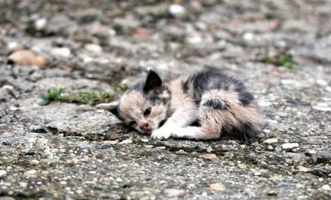 — Это трехцветная кошка — она приносит счастье! — сказал кто-то из девочек. — Кис-кис-кис…иди сюда! Какая ты грязная!