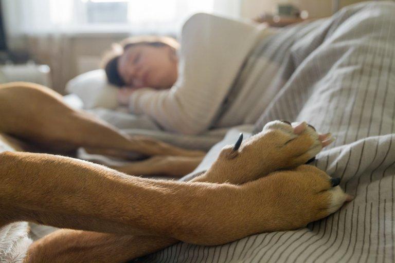 Если собака спит с вами в постели, посмотрите, какое место она выбирает: это расскажет многое о ее отношении к вам