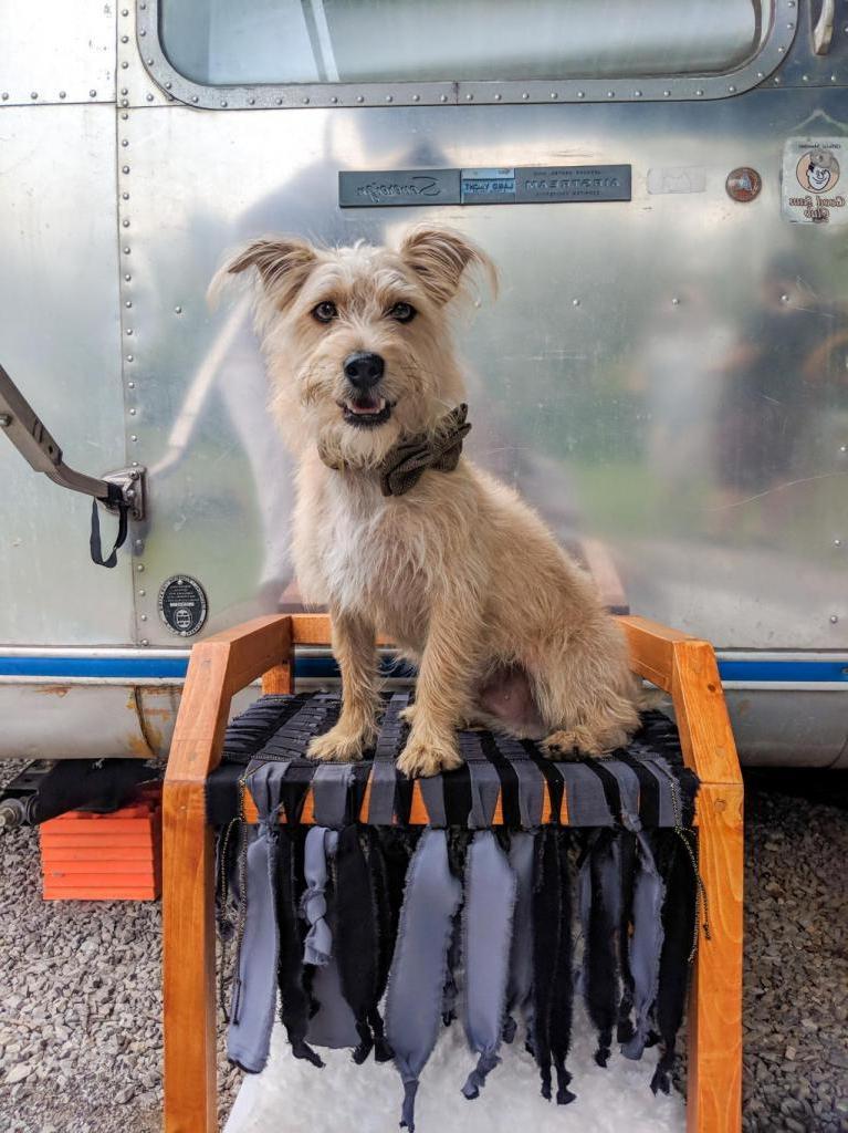 Как сделать для собаки удобную двухъярусную кровать своими руками: пошаговая инструкция