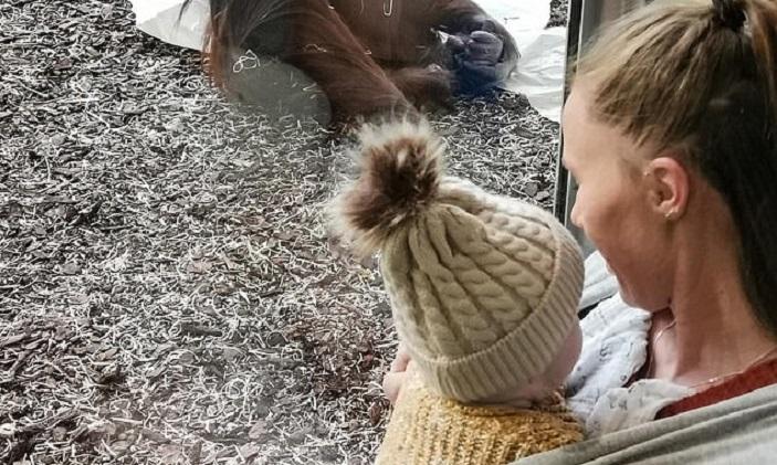 Женщина села кормить ребенка в зоопарке. К ней подошла мама орангутан (трогательное видео)
