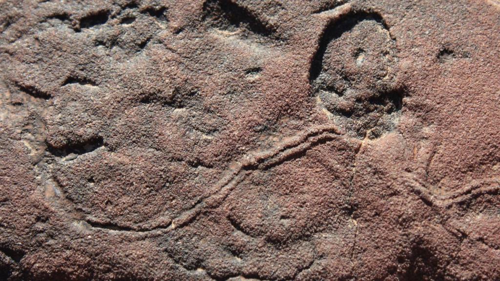 Папоротники, кочаны, подушки: как выглядели самые первые животные на Земле?