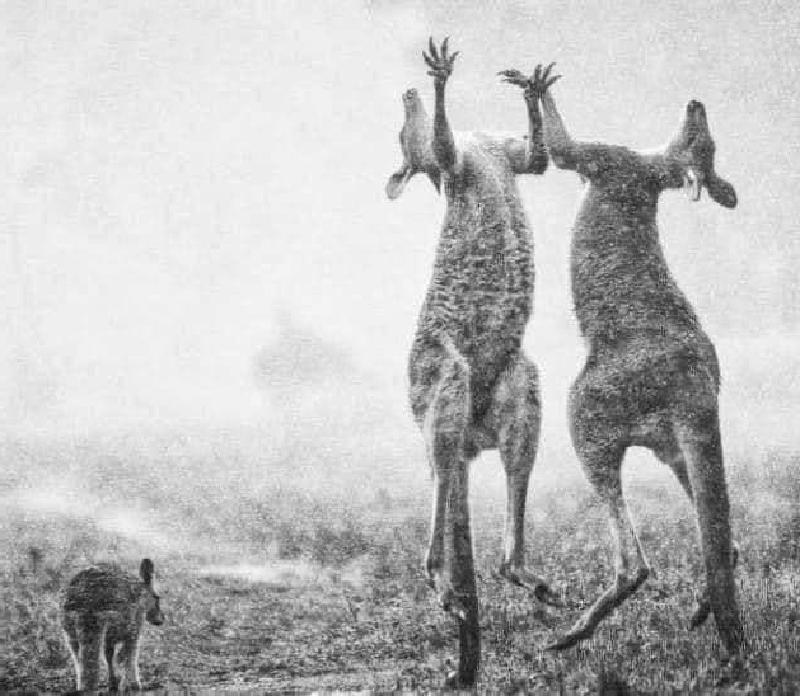В Австралии радуются долгожданному дождю: видео, трогающее многих