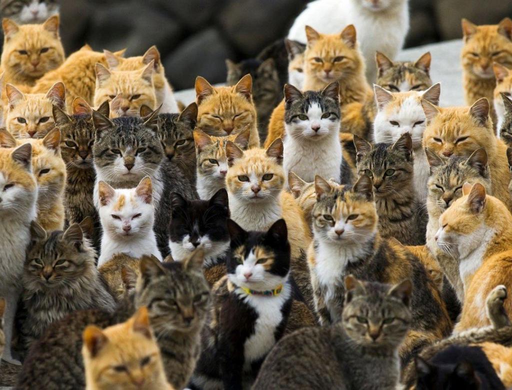 Кошатники — ленивые, собачники — дотошные. То, какое животное вы предпочитаете держать дома, многое о вас говорит