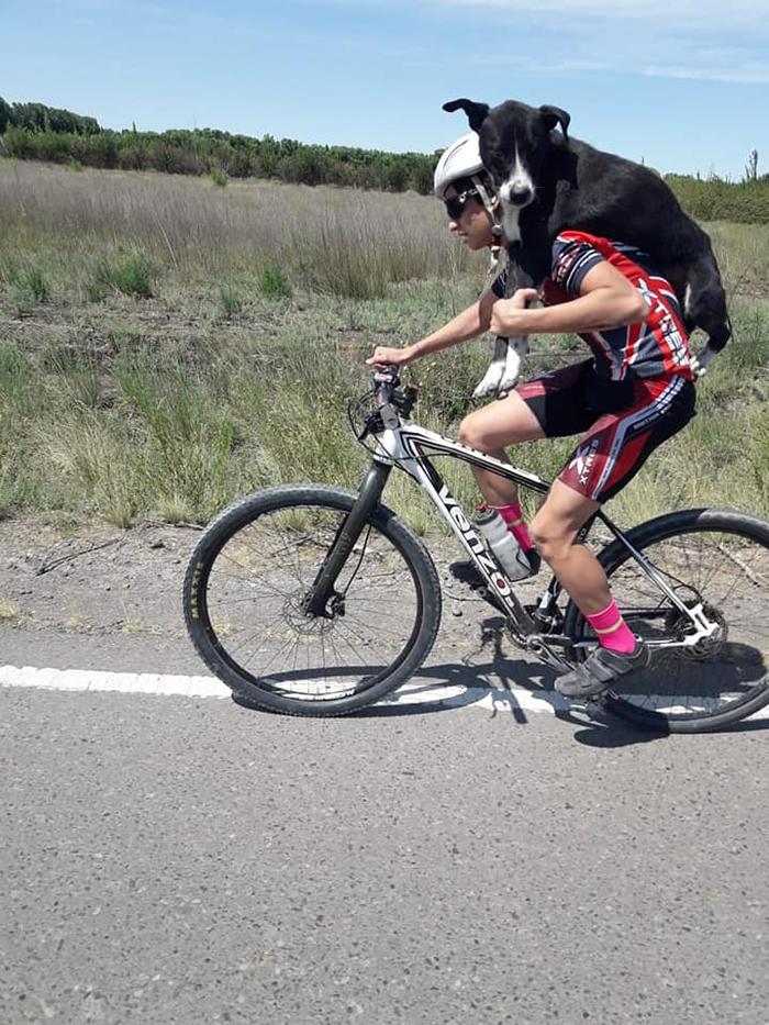 Аргентинские велосипедисты нашли на дороге собаку и с ветерком домчали пса до цивилизации