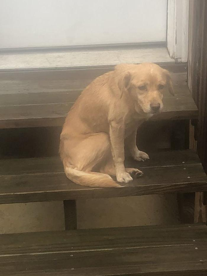 Они назвали собаку Сьюзи: мужчина не закрыл дверь после прогулки, и этим воспользовался голодный щенок