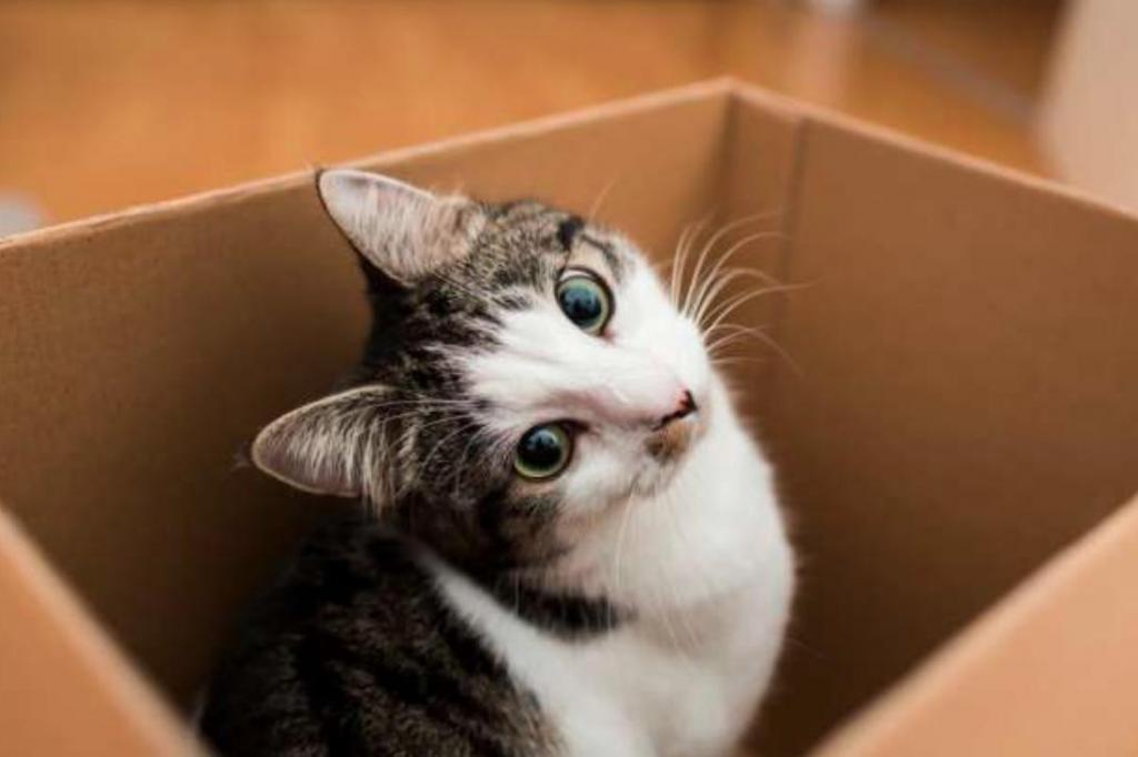 Помощь в поиске второй половинки и другие причины, по которым нам следует завести кота