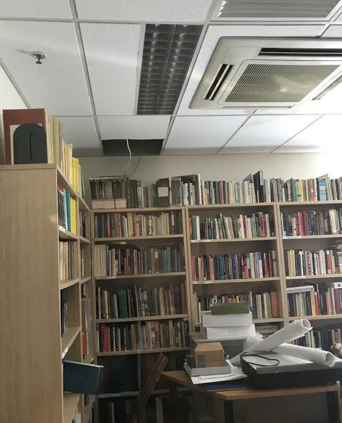 Опоссум разгромил офис. Милое пушистое животное повеселило весь университет