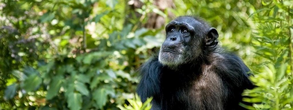 Не столь известные, как Серенгети или Масаи-Мара, но не менее прекрасные: малоизвестные национальные парки Африки