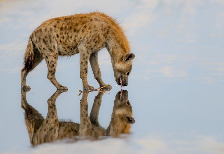 Захватывающие фото, показывающие всю красоту отражения объектов в стоячей воде: симметричные снимки