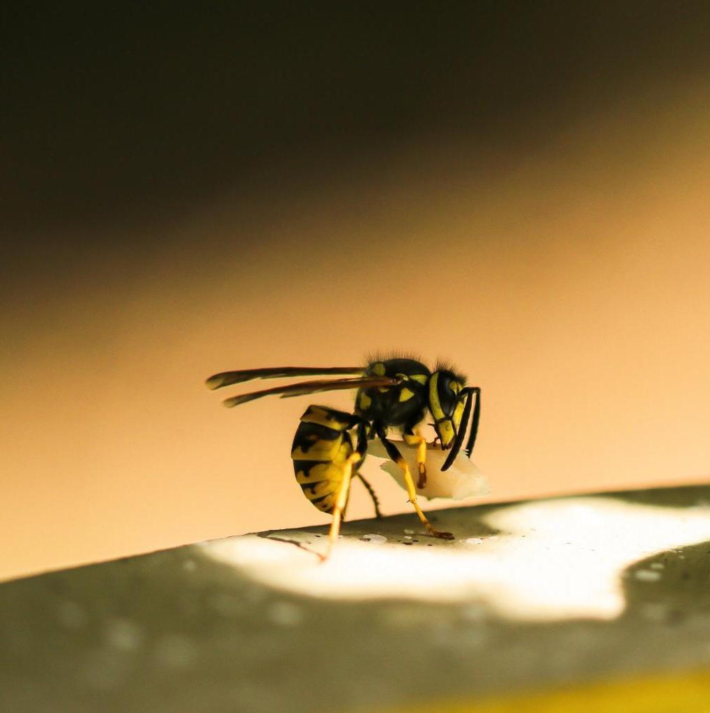 Эволюция в действии: ученые выяснили, что бумажные осы научились распознавать лица друг друга
