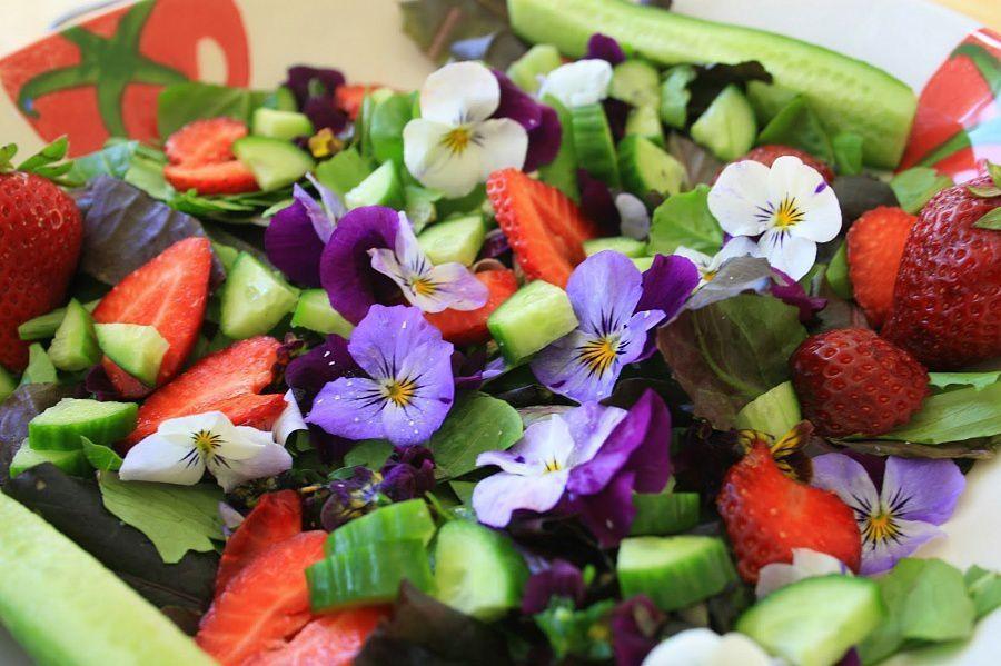 Настурция, братки, роза: подруга-садовод рассказала, какой нужен уход цветам, которые можно есть