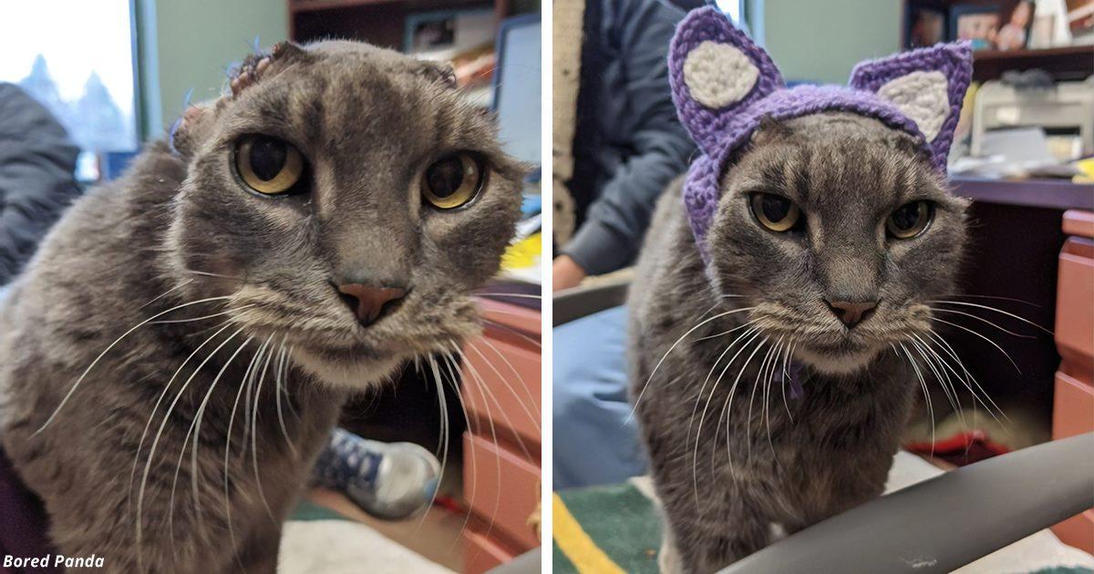 Бродячая кошка с вязаными ушами наконец то нашла дом навсегда