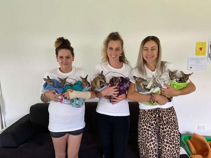 Очаровательные детеныши валлаби, спасенные после пожара, были названы в честь погибших австралийских пожарных