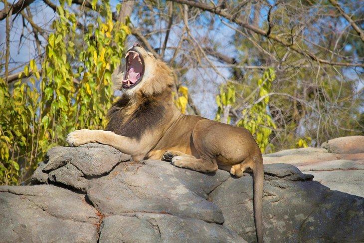 Популярные достопримечательности и развлечения в городе Фресно, Калифорния: чем уникален местный зоопарк