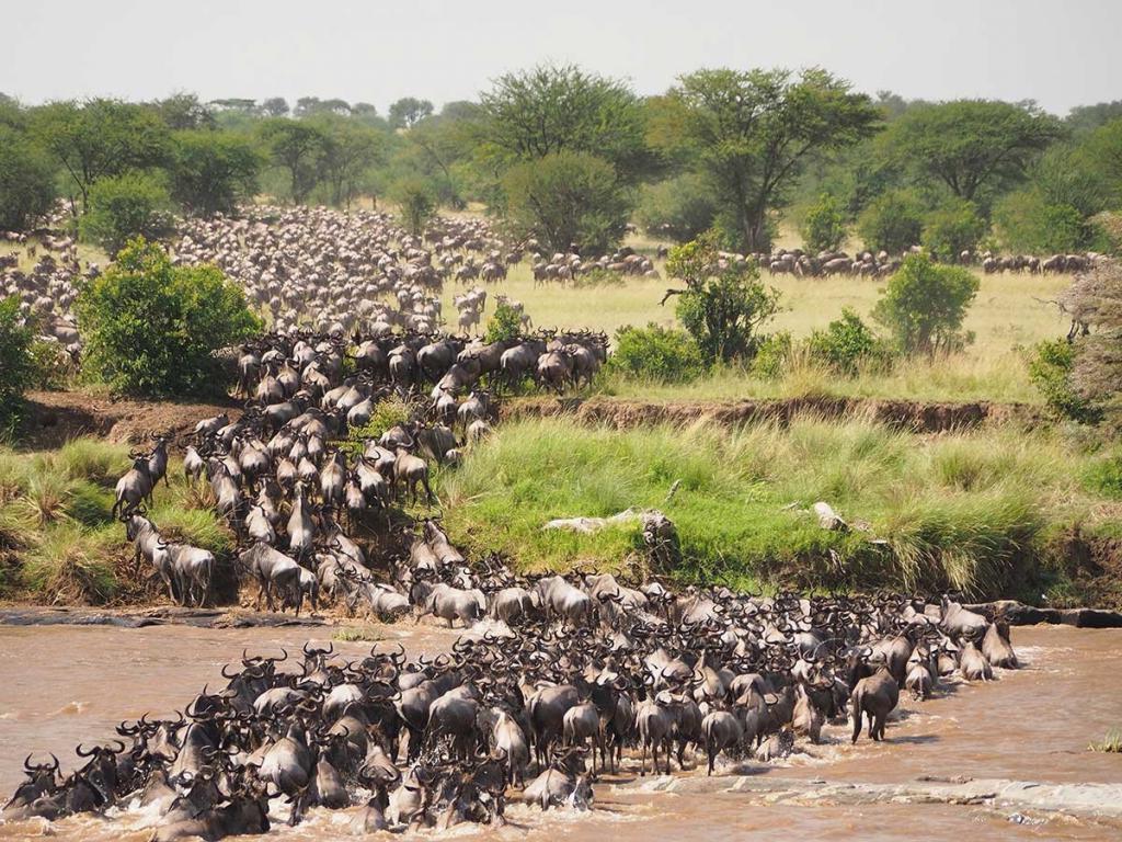 Конфликт между человеком и дикой природой: что угрожает заповедникам Восточной Африки