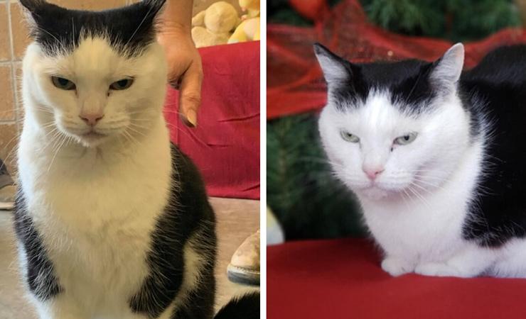 Ненавидит розовый цвет, котят и детей: благодаря объявлению без прикрас самая вредная кошка с необычным именем нашла новый дом