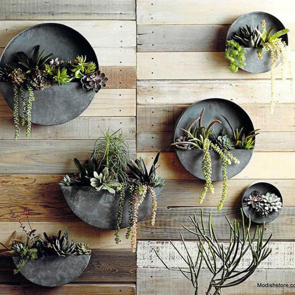 7 хитростей, которые помогут уберечь комнатные растения от кота