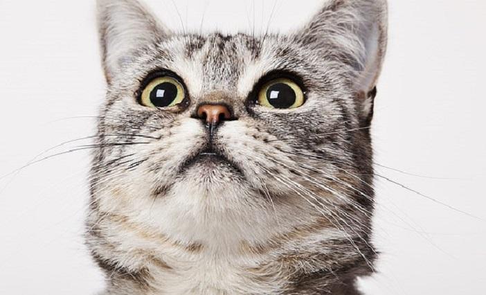 Встречаясь с мужчиной, Морин заметила, что он не любит ее кота. Женщина ни капли не сомневалась, кого бросить