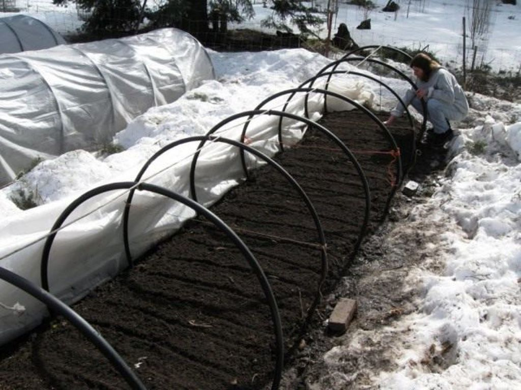 Зимний садовый календарь. Садовые работы с января по март