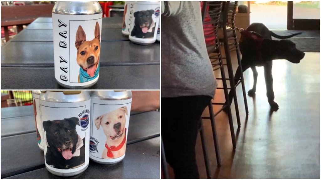 Флорида: необычный способ найти хозяев для собак придумали пивовары – они размещают фото питомцев на пивных банках
