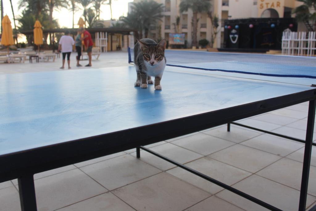 Почему коты на Кипре – хозяева острова? Личная история