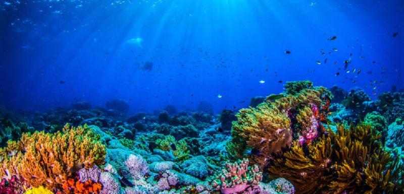 В заповеднике Палау в Тихом океане туристам запретили использовать солнцезащитный крем, чтобы сохранить коралловые рифы