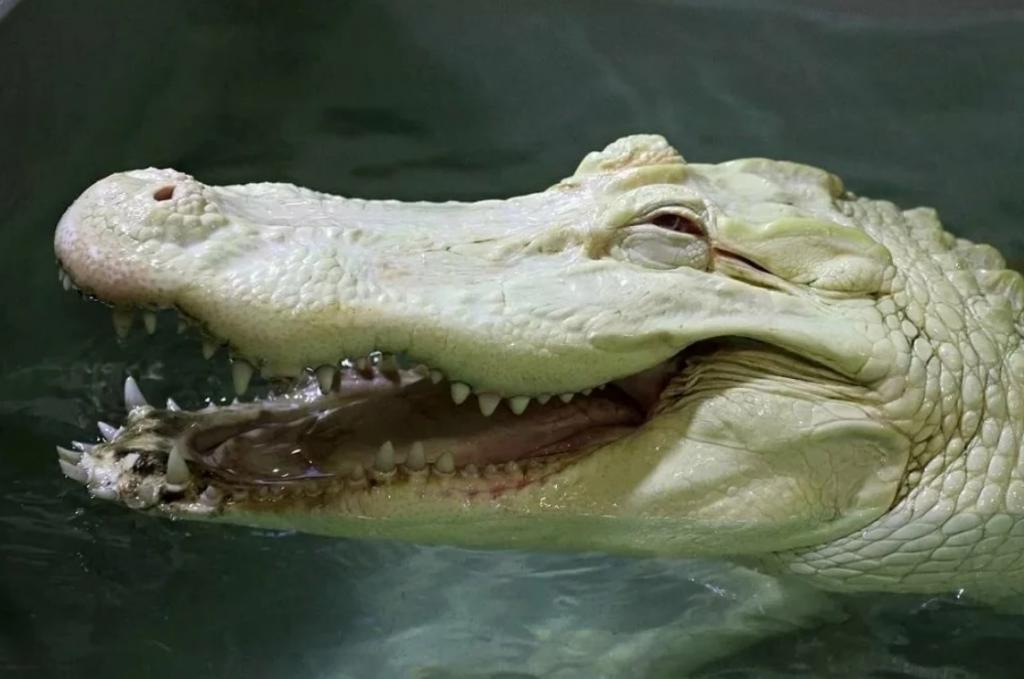 И скачут, и галопом носятся: оказывается, крокодилы - не такие ленивые и неподвижные, как это кажется в зоопарке (видео)