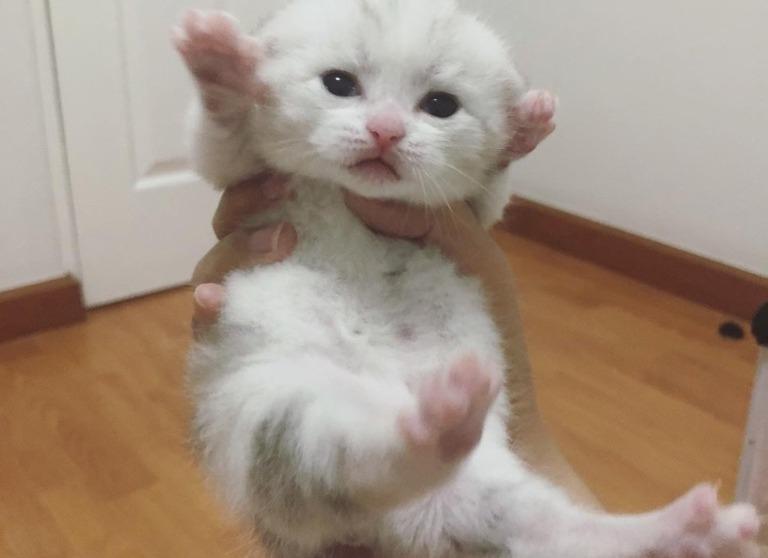 Хозяйка не на шутку переживала из-за большого животика котенка, пока не узнала правду