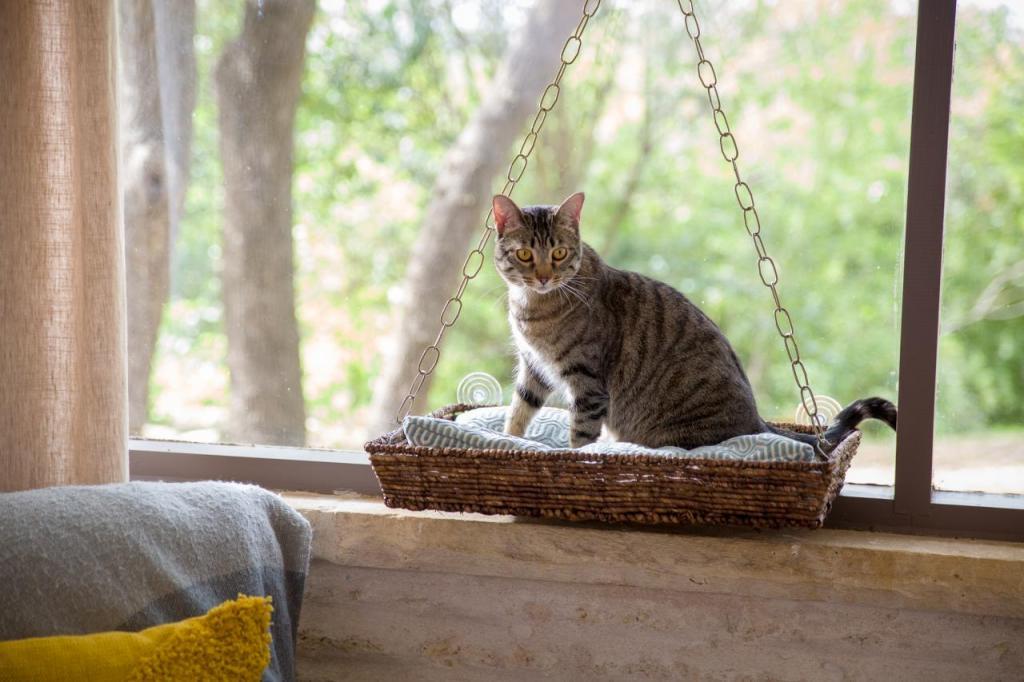 Как обустроить на подоконнике место для кота, который любит там находиться: пошаговая инструкция