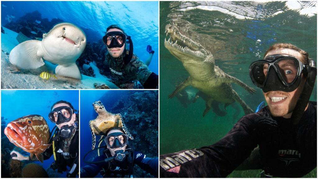 Селфи с акулой: бесстрашный дайвер делает фото с экзотическими морскими существами