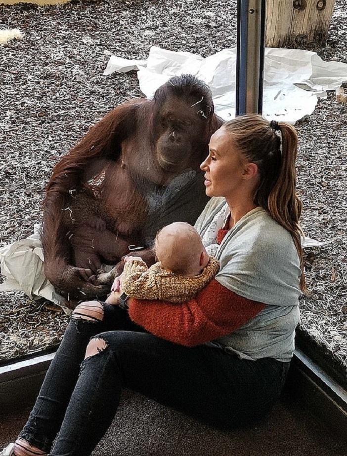 Женщина села кормить ребенка в зоопарке. К ней подошла мама-орангутан (трогательное видео)