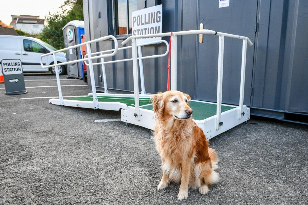Бюллетень для лошади и собаки: как домашние любимцы британцев ходят вместе с хозяевами на выборы
