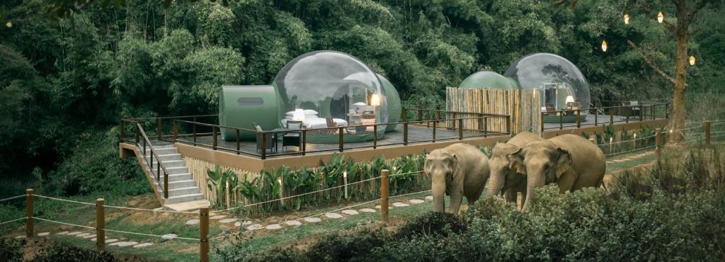 Пузыри в джунглях: станция по спасению слонов предлагает с комфортом наблюдать за животными из роскошных прозрачных палаток (фото)