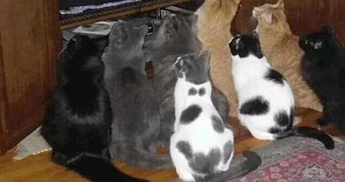 Кошки столпились вместе не из-за еды: они хотели посмотреть телевизор
