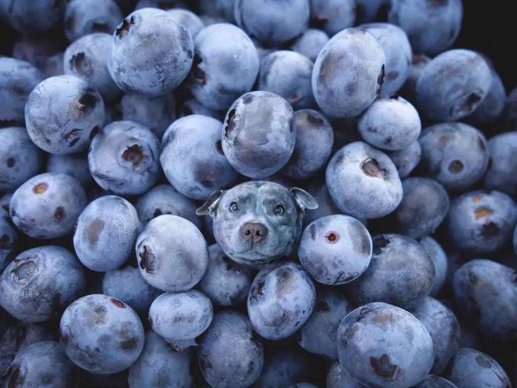 Собаки в еде : художник ловко прячет псов в фотографиях с едой (фото)