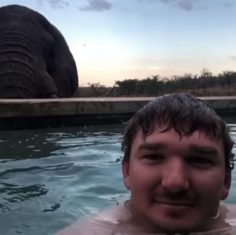Экскурсовод плавал в бассейне. Сзади подошел слон, чтобы попить воды: видео