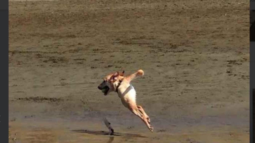 Интернет смеется над тем, как получаются собаки на панорамных фотографиях (фото)