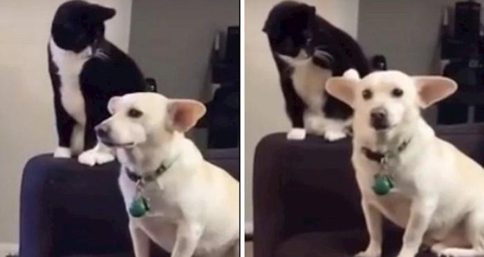 Кот хотел ударить собаку, за что от нее и получил: видео