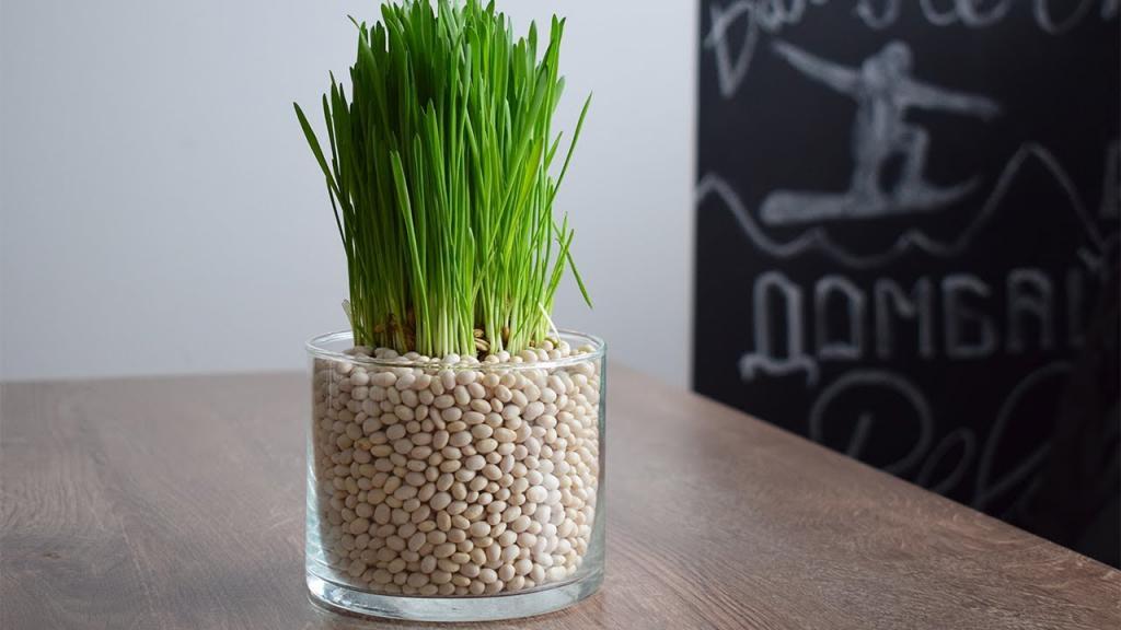 Как создать идеальный сад в своей квартире: советы по озеленению