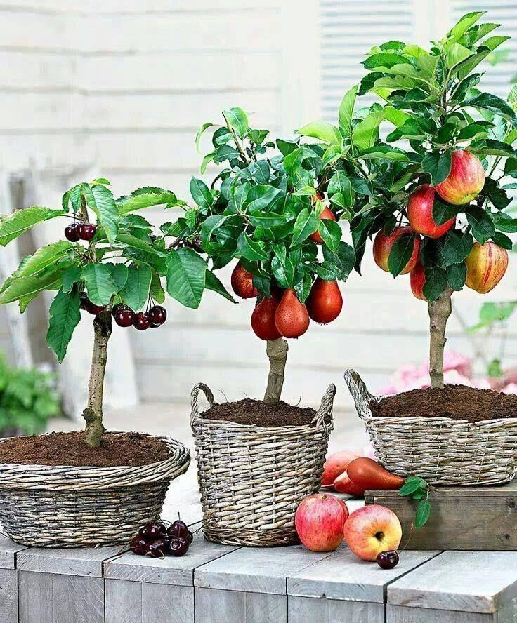 Фруктовый сад в центре города: как Крис решила выращивать овощи и фрукты у себя дома в Нью Йорке