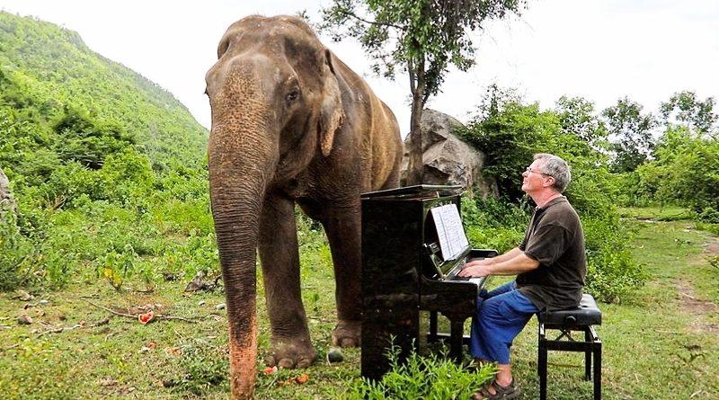 Волшебная сила искусства: слон начинает танцевать под красивую фортепианную музыку (видео)