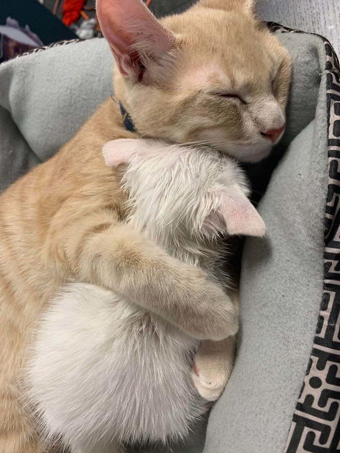 Питомец счастлив, даже когда спит, кошка жалеет подкидыша. Несколько фото животных, которых приютили хозяева