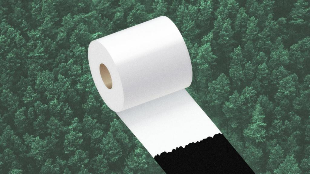 Почему туалетная бумага белая? Оказывается, на это есть 3 научные причины